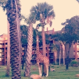 animalkingdomlodge2